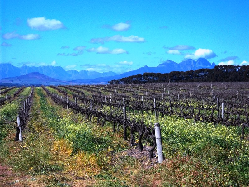Cape_Town_Holiday_Accommodation_Vines